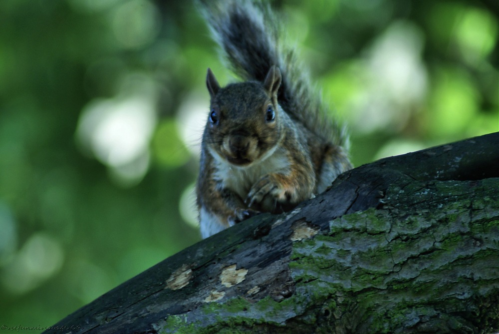 photoblog image Squirrel Tales 2 of 3